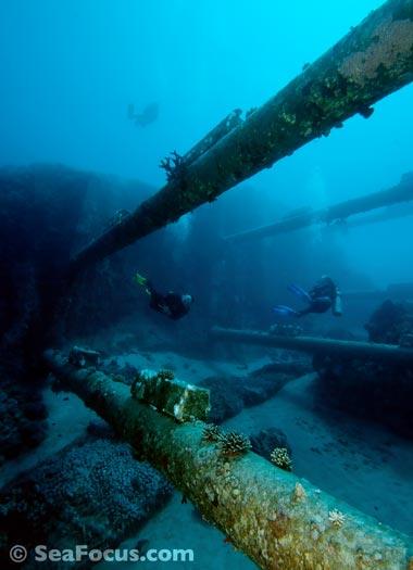 Diving report for aqaba jordan seafocus scuba diving for Aqaba dive