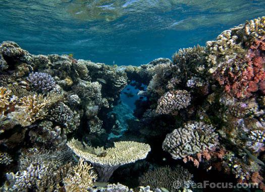 Jordan diving regions aqaba for Aqaba dive